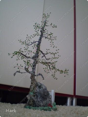 деревья 5 фото фото 4