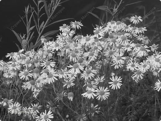 В августовский денек ездили за город и я вооруживщись фотоаппаратом бегала по берегу снимала природу))) фото 19