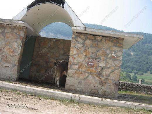 Пешком ослики идти не хотят. фото 3