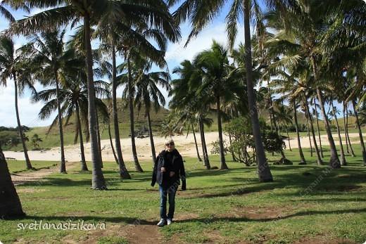 Начинается вторая часть нашего знакомства с Островом Пасхи. Это Рано-Рараку— одно из наиболее интересных мест для туристов. У подножия этого вулкана расположено около 300 моаи, различной высоты и на разной стадии готовности.  фото 11