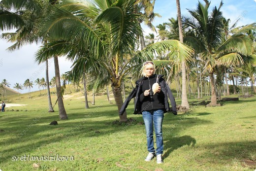 Начинается вторая часть нашего знакомства с Островом Пасхи. Это Рано-Рараку— одно из наиболее интересных мест для туристов. У подножия этого вулкана расположено около 300 моаи, различной высоты и на разной стадии готовности.  фото 14