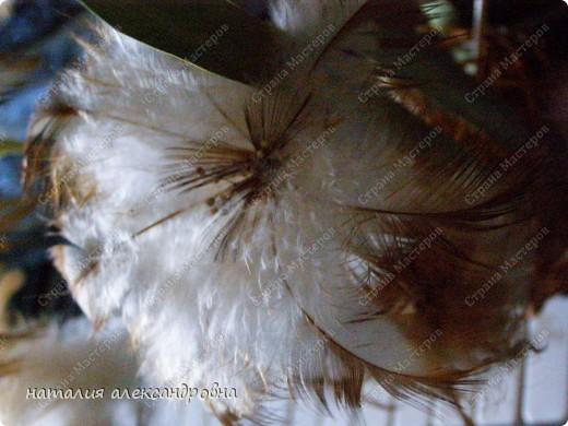 такая лилия фото 6