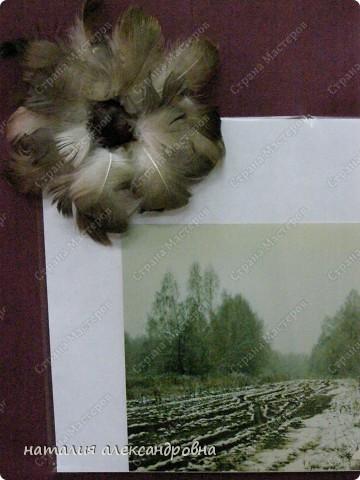 такая лилия фото 7