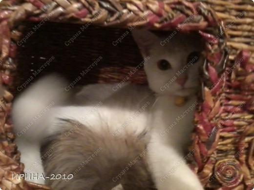 домик для котейки в подарок(на д.рождение хозяйки) фото 6