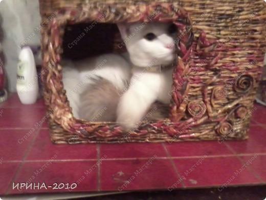 домик для котейки в подарок(на д.рождение хозяйки) фото 7