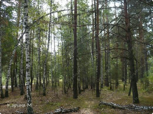Пока стоят теплые деньки  успеваем съездить в лес за грибочками) фото 1