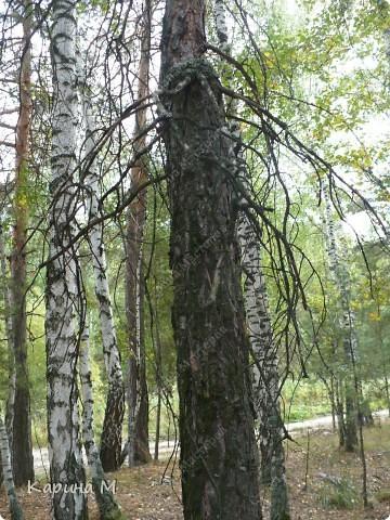 Пока стоят теплые деньки  успеваем съездить в лес за грибочками) фото 3