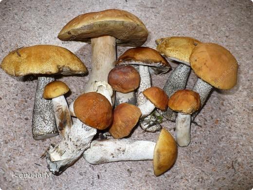 Пока стоят теплые деньки  успеваем съездить в лес за грибочками) фото 13