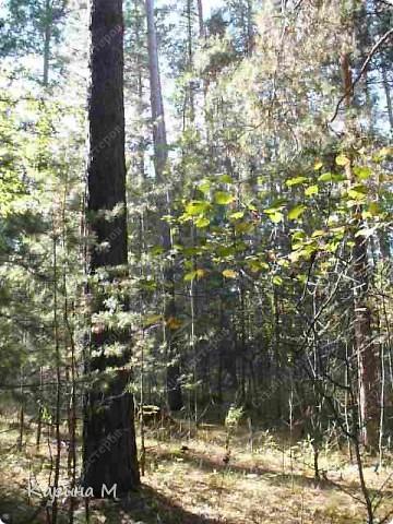 Пока стоят теплые деньки  успеваем съездить в лес за грибочками) фото 15