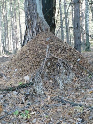 Пока стоят теплые деньки  успеваем съездить в лес за грибочками) фото 18