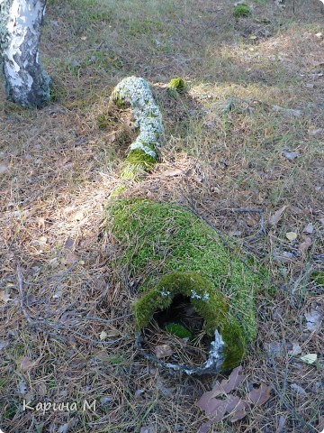 Пока стоят теплые деньки  успеваем съездить в лес за грибочками) фото 22