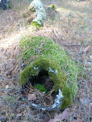 Пока стоят теплые деньки  успеваем съездить в лес за грибочками) фото 23