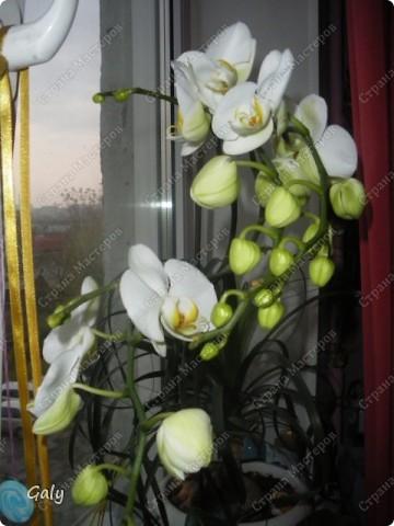В прошлом году на день рождения мне подарили эту экзотику. Раньше с орхидеями дел никаких я не имела, с какого бока к ним подступиться даже не представляла, но теперь-то уж куда деваться... фото 2