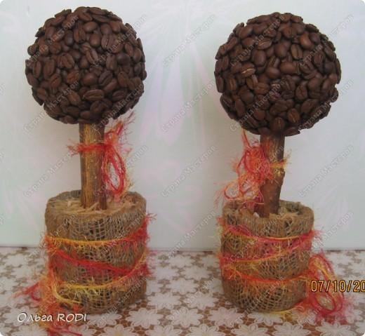 Ароматные кофейные деревья! Ой - нюхала бы и нюхала! Уехали деревья к новым хозяквам - дарить им свой чудесный аромат! фото 1