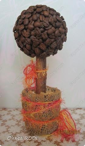 Ароматные кофейные деревья! Ой - нюхала бы и нюхала! Уехали деревья к новым хозяквам - дарить им свой чудесный аромат! фото 2
