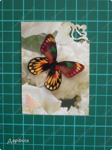 Сделала еще партию карточек с бабочками.  Приглашаю кредиторов, taivis, ШМыГа, Sjusen.   фото 3