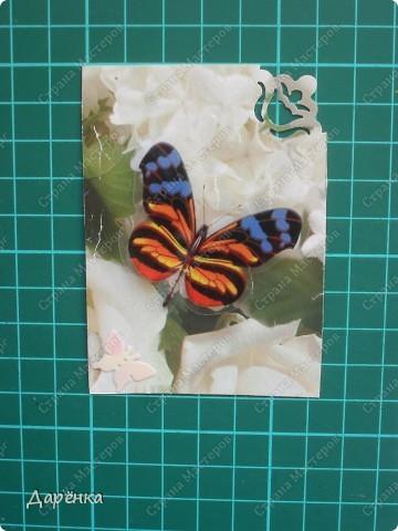 Сделала еще партию карточек с бабочками.  Приглашаю кредиторов, taivis, ШМыГа, Sjusen.   фото 4