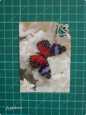 Сделала еще партию карточек с бабочками.  Приглашаю кредиторов, taivis, ШМыГа, Sjusen.   фото 5