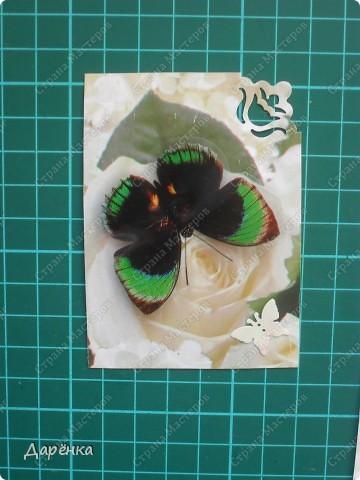 Сделала еще партию карточек с бабочками.  Приглашаю кредиторов, taivis, ШМыГа, Sjusen.   фото 7
