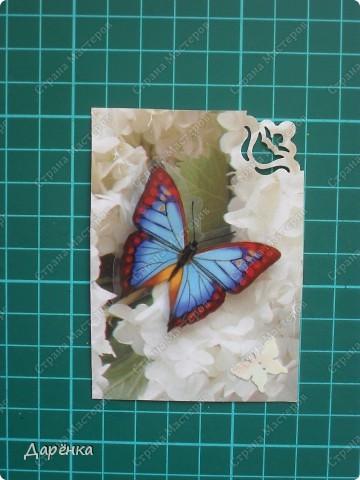 Сделала еще партию карточек с бабочками.  Приглашаю кредиторов, taivis, ШМыГа, Sjusen.   фото 9