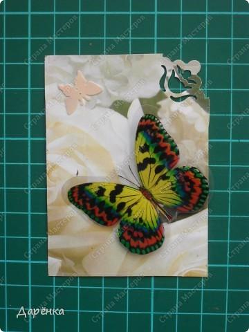 Сделала еще партию карточек с бабочками.  Приглашаю кредиторов, taivis, ШМыГа, Sjusen.   фото 10