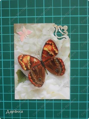 Сделала еще партию карточек с бабочками.  Приглашаю кредиторов, taivis, ШМыГа, Sjusen.   фото 13