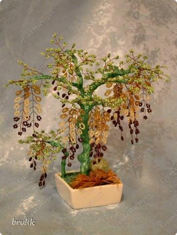 Деревце фото 1