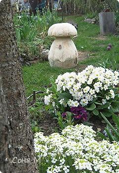 В саду фото 3