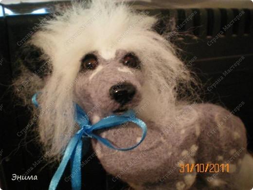 Голая китайская хохлатая собачка в исполнении моей сестры Даши.  Сваляна из мериносовой шерсти, нос - полимерная глина, глазки стеклянные. (собственно ради применения новых глазок работа затевалась:))))) фото 3