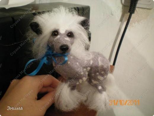 Голая китайская хохлатая собачка в исполнении моей сестры Даши.  Сваляна из мериносовой шерсти, нос - полимерная глина, глазки стеклянные. (собственно ради применения новых глазок работа затевалась:))))) фото 2