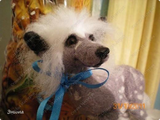 Голая китайская хохлатая собачка в исполнении моей сестры Даши.  Сваляна из мериносовой шерсти, нос - полимерная глина, глазки стеклянные. (собственно ради применения новых глазок работа затевалась:))))) фото 5