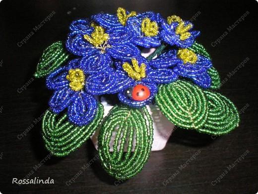 Мои любимые цветы фото 2