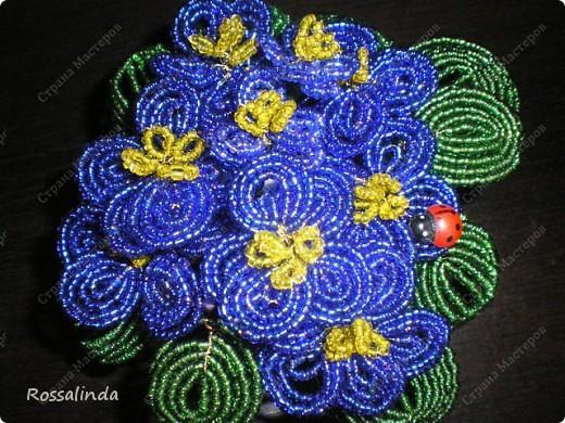 Мои любимые цветы фото 3
