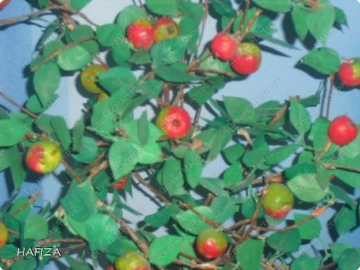 яблонька фото 2
