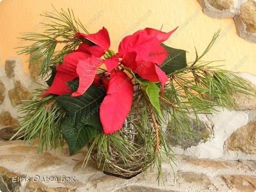 Уже везде ощущается Дух Рождества... И все мы  погружаемся в воспоминания детства и не смотря ни на что чувствуем, где-то в глубине души, чувство детской радости от ожидания какого-то  новогоднего чуда... Запах елки и апельсин... Это чувство всегда возвращается к нам раз в год и возвращает нас, в какой-то мере, в мир безоблачного детства и радости. Наверно поэтому в этом году я так  ответственно подошла к подготовке к этим милым  праздникам. Очень захотелось вернутся  в свое детство, когда с мамой готовились к Новому году заранее. Когда делали украшения все  вместе и самое главное- не в последний момент.Так что и я стала готовится к этому еще с сентября. Покупая  постепенно  материалы, краски и  неся из леса все, что понравится. Шишки, ветки, коряги и тому подобное. С 27 ноября в Германии наступил 1 Адвент. Это значит, что уже официально везде горят с этого дня  новогодние лампы в окнах, украшены елки во дворах. Везде горят свечи, как один из главных атрибутов Рождества...Везде букеты из еловых и сосновых веток... Меня это тоже не обошло стороной...Единственное, что делают позже, так это украшают рождественскую елку дома только накануне рождества 24 декабря. Рождественские звезды-цветы  сделаны из фетра.Так же использовала  веточки от настоящей туи. Мне показалось, что они очень гармонично смотрятся. Цветы к лампе крепила на двух сторонний скотч, чтобы после праздников можно было все безболезненно снять. Веточки туи прикрепила при помощи булавочек. Ветки срезаны более 2-х недель назад, но все такие же зеленые.... фото 6
