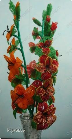 Гладиолусы - это мои самые любимые цветы. фото 2