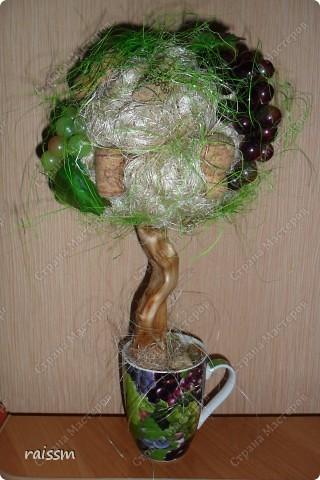 Виноградное  дерево. фото 1