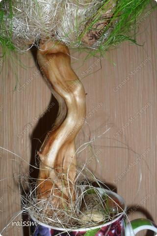 Виноградное  дерево. фото 3