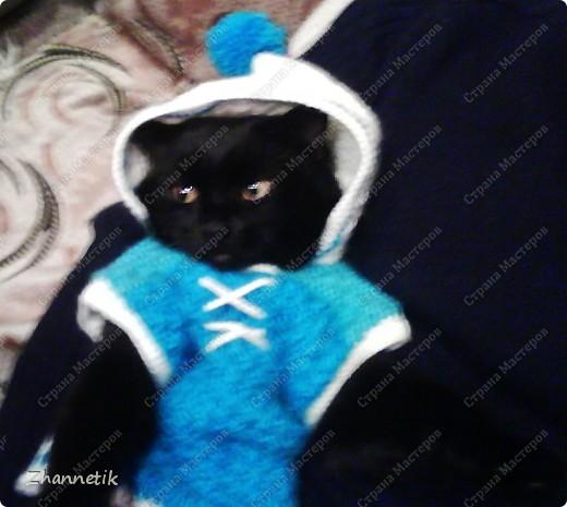 модный котик по-моему,а вы как считаете? фото 1