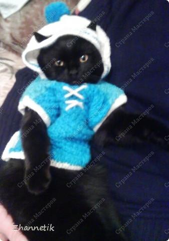 модный котик по-моему,а вы как считаете? фото 2