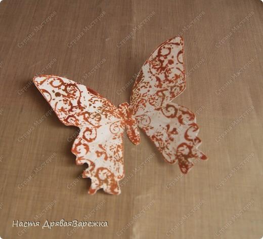 Бабочка-красавица фото 5