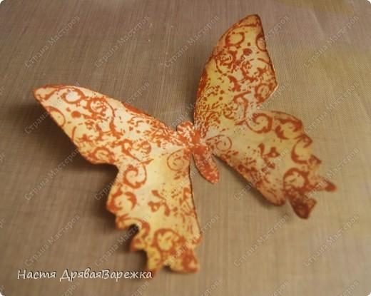 Бабочка-красавица фото 7