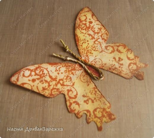 Бабочка-красавица фото 9