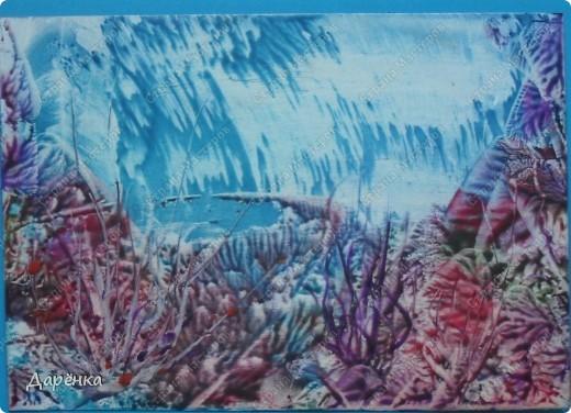 Такие вот картинки подводного мира получились. фото 2