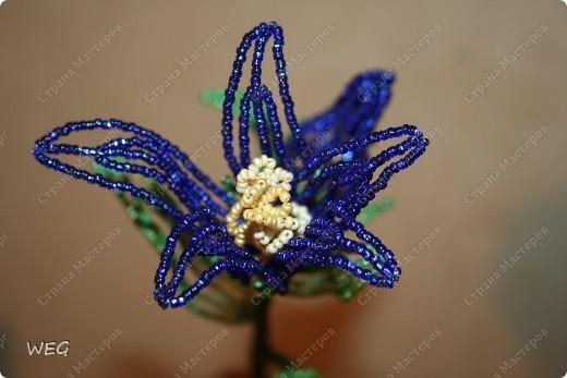 Одно из первых моих творений. Углядела этот цветок в одной из первых прочитанных мною книг по бисероплетению. Очень захотелось сделать. фото 2