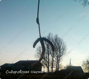 Такой зяблик прыгал около школьного крыльца. фото 8