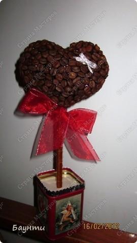 Мои кофейные сердца.Кофе в горшочки не насыпала,т.к деревцам предстояла поездка в другой город. фото 1