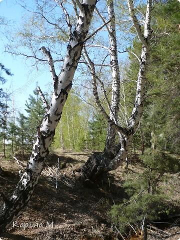 На конец то настал мой самый любимый месяц в году - МАЙ))) Предлагаю прогуляться и насладится природой пробуждающейся после долгого зимнего сна.... фото 25