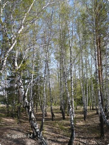На конец то настал мой самый любимый месяц в году - МАЙ))) Предлагаю прогуляться и насладится природой пробуждающейся после долгого зимнего сна.... фото 43