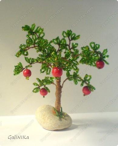 Яблоня с яблоками (экспериментальная) фото 6
